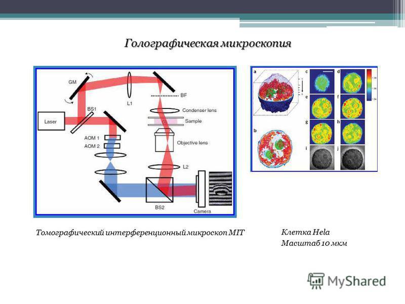 Томографический интерференционный микроскоп MIT Клетка Hela Масштаб 10 мкм
