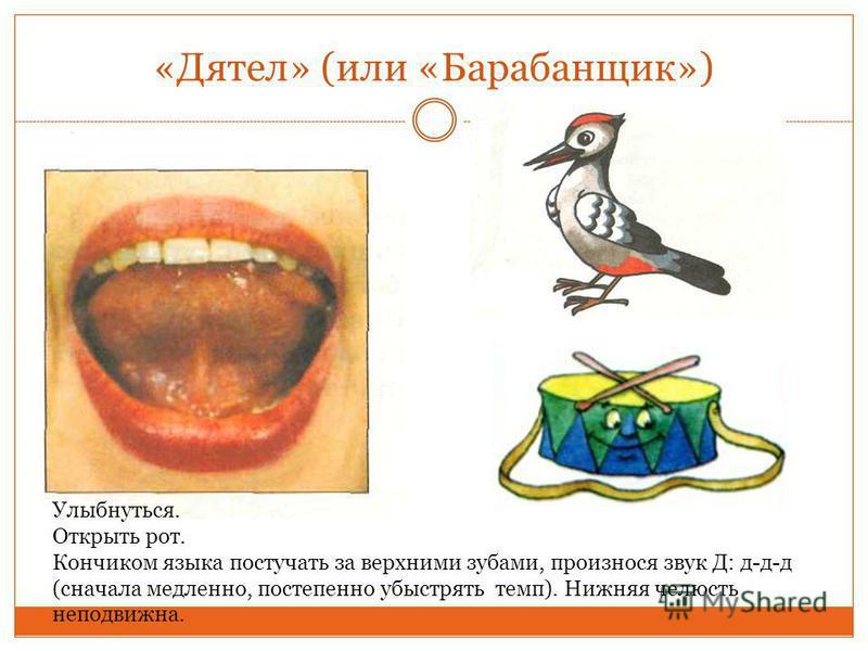 «Дятел» (или «Барабанщик») Улыбнуться. Открыть рот. Кончиком языка постучать за верхними зубами, произнося звук Д: д-д-д (сначала медленно, постепенно убыстрять темп). Нижняя челюсть неподвижна.