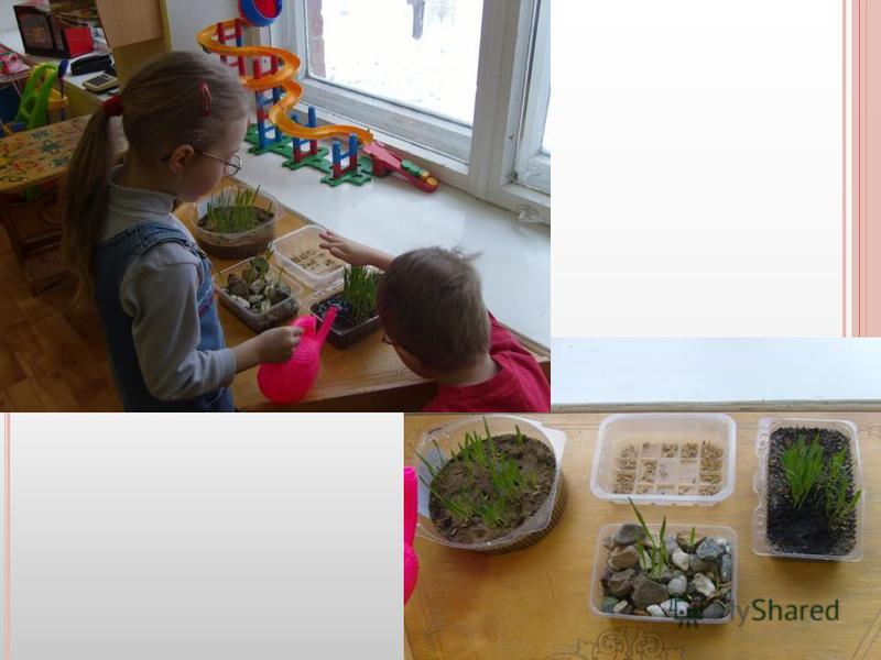 Познакомились с условиями жизни растений.