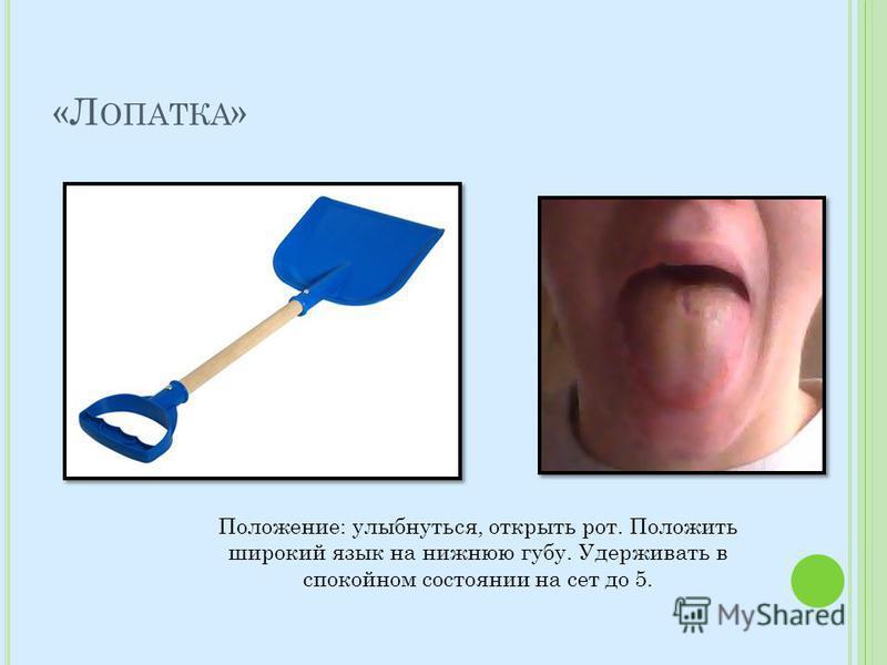 «Л ОПАТКА » Положение: улыбнуться, открыть рот. Положить широкий язык на нижнюю губу. Удерживать в спокойном состоянии на сет до 5.