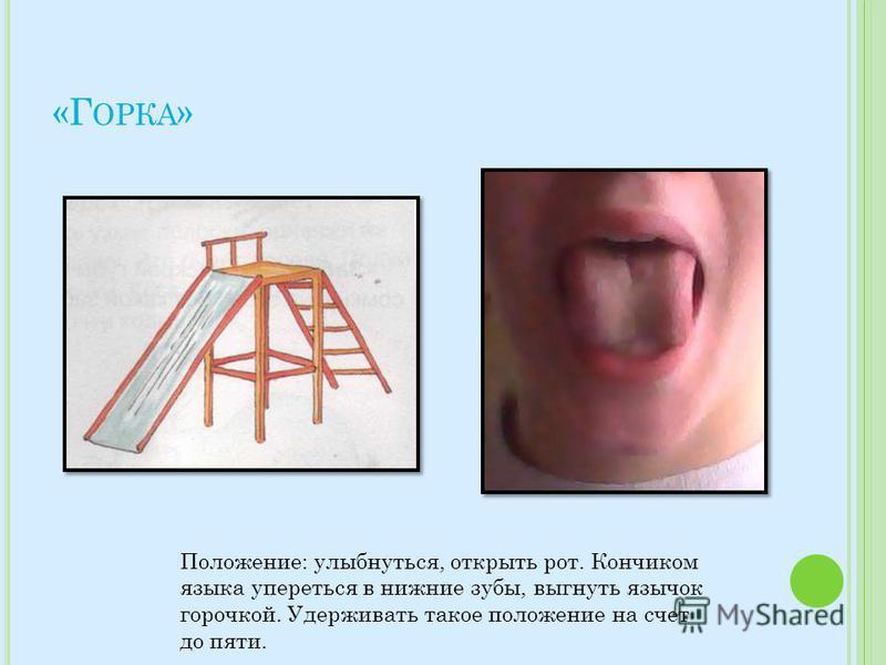 «Г ОРКА » Положение: улыбнуться, открыть рот. Кончиком языка упереться в нижние зубы, выгнуть язычок горочкой. Удерживать такое положение на счет до пяти.
