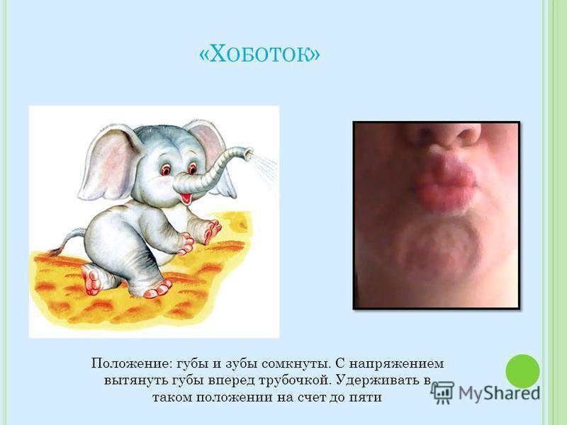 «Х ОБОТОК » Положение: губы и зубы сомкнуты. С напряжением вытянуть губы вперед трубочкой. Удерживать в таком положении на счет до пяти