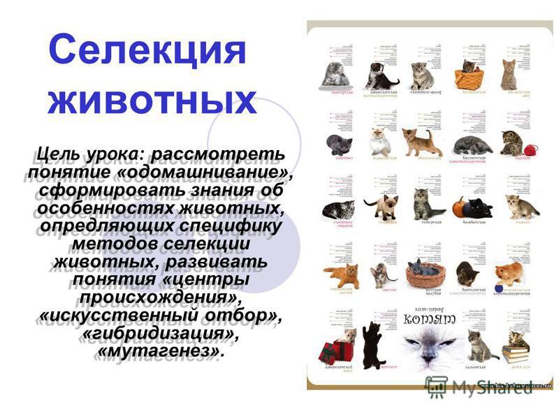 Цель урока: рассмотреть понятие «одомашнивание», сформировать знания об особенностях животных, опредляющих специфику методов селекции животных, развивать понятия «центры происхождения», «искусственный отбор», «гибридизация», «мутагенез». Селекция жив
