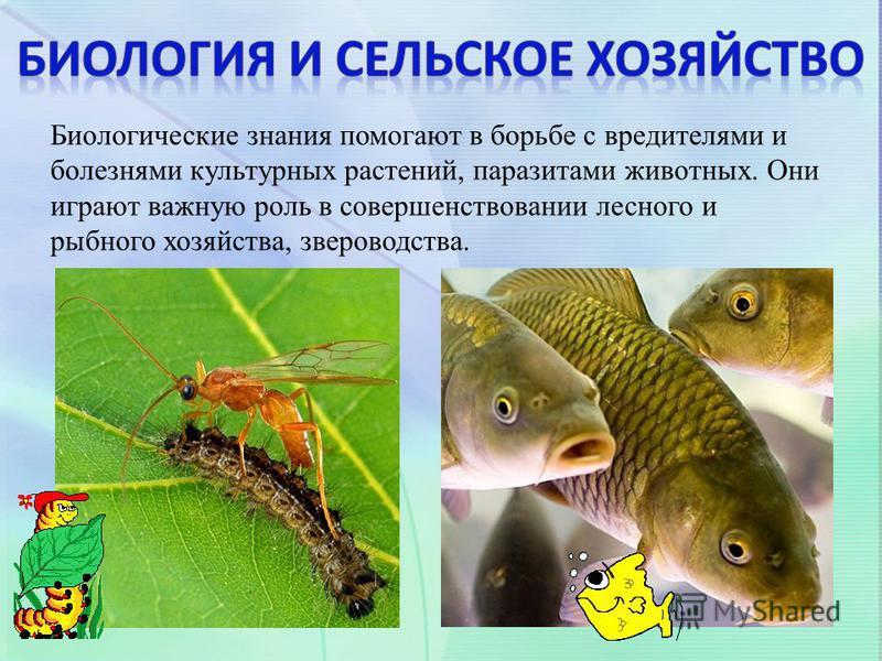 Биологические знания помогают в борьбе с вредителями и болезнями культурных растений, паразитами животных. Они играют важную роль в совершенствовании лесного и рыбного хозяйства, звероводства.