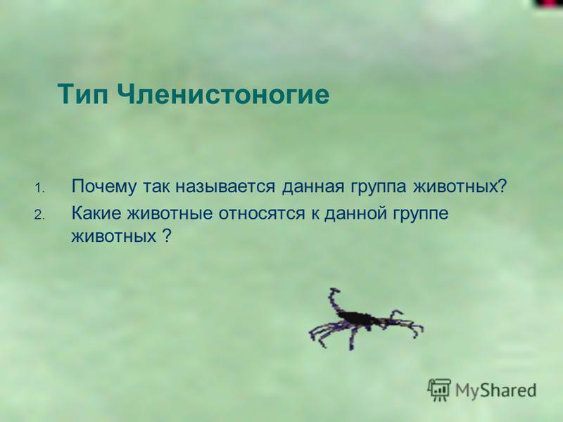 Тип Членистоногие 1. Почему так называется данная группа животных? 2. Какие животные относятся к данной группе животных ?