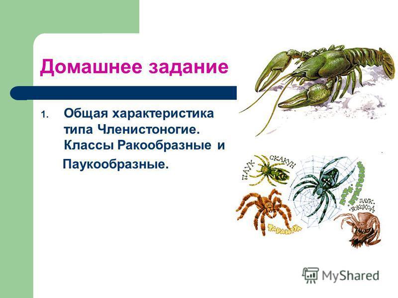 Домашнее задание 1. Общая характеристика типа Членистоногие. Классы Ракообразные и Паукообразные.