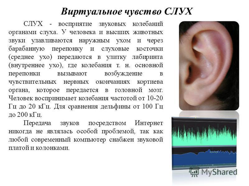 Виртуальное чувство СЛУХ СЛУХ - восприятие звуковых колебаний органами слуха. У человека и высших животных звуки улавливаются наружным ухом и через барабанную перепонку и слуховые косточки (среднее ухо) передаются в улитку лабиринта (внутреннее ухо),