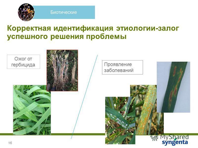 16 Корректная идентификация этиологии-залог успешного решения проблемы Ожог от гербицида Проявление заболеваний