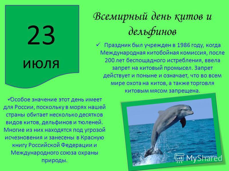 Всемирный день китов и дельфинов Праздник был учрежден в 1986 году, когда Международная китобойная комиссия, после 200 лет беспощадного истребления, ввела запрет на китовый промысел. Запрет действует и поныне и означает, что во всем мире охота на кит