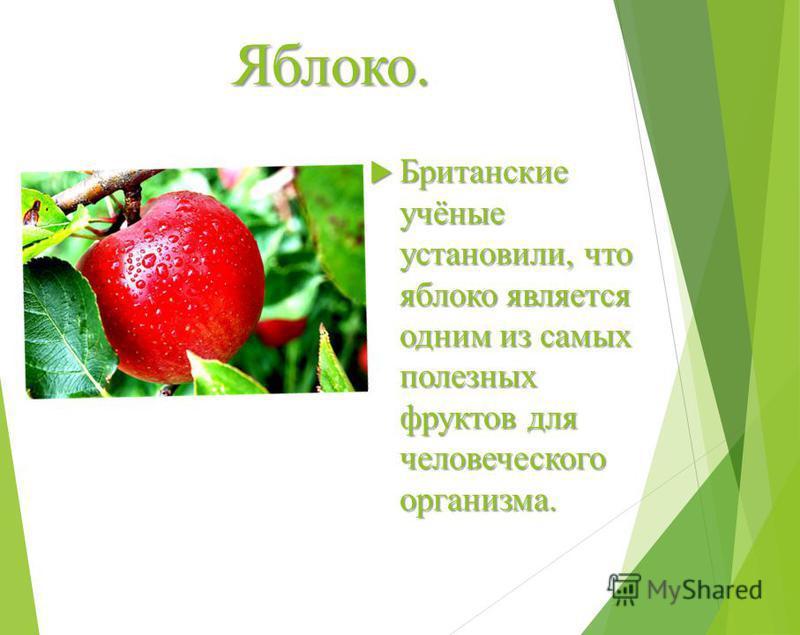 Яблоко. Британские учёные установили, что яблоко является одним из самых полезных фруктов для человеческого организма. Британские учёные установили, что яблоко является одним из самых полезных фруктов для человеческого организма.