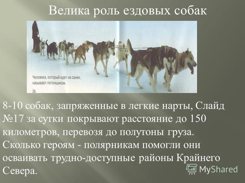 8-10 собак, запряженные в легкие нарты, Слайд 17 за сутки покрывают расстояние до 150 километров, перевозя до полутоны груза. Сколько героям - полярникам помогли они осваивать трудно - доступные районы Крайнего Севера. Велика роль ездовых собак
