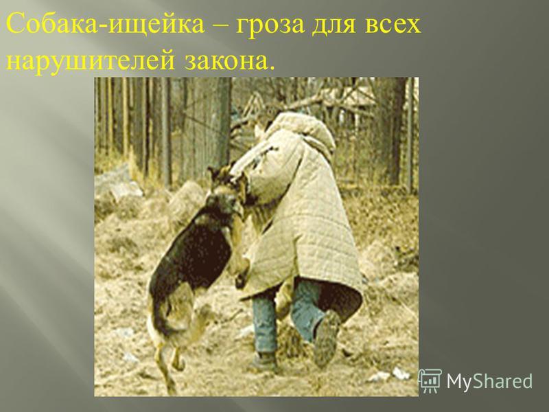 Собака - ищейка – гроза для всех нарушителей закона.