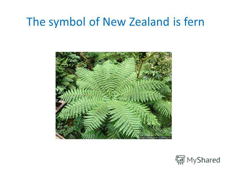 The symbol of New Zealand is fern