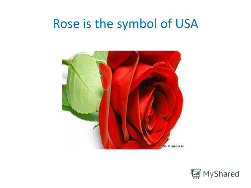 Rose is the symbol of USA