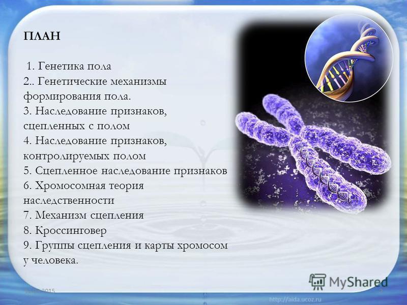 ПЛАН 1. Генетика пола 2.. Генетические механизмы формирования пола. 3. Наследование признаков, сцепленных с полом 4. Наследование признаков, контролируемых полом 5. Сцепленное наследование признаков 6. Хромосомная теория наследственности 7. Механизм