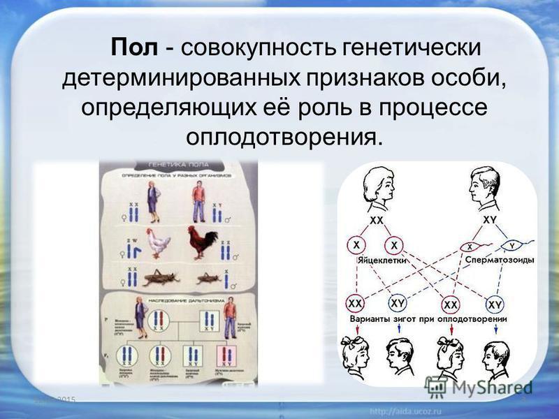 Пол - совокупность генетически детерминированных признаков особи, определяющих её роль в процессе оплодотворения. 12.03.20153