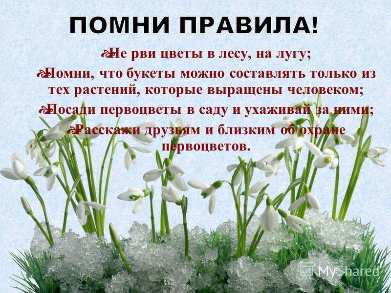 Не рви цветы в лесу, на лугу; Помни, что букеты можно составлять только из тех растений, которые выращены человеком; Посади первоцветы в саду и ухаживай за ними; Расскажи друзьям и близким об охране первоцветов.