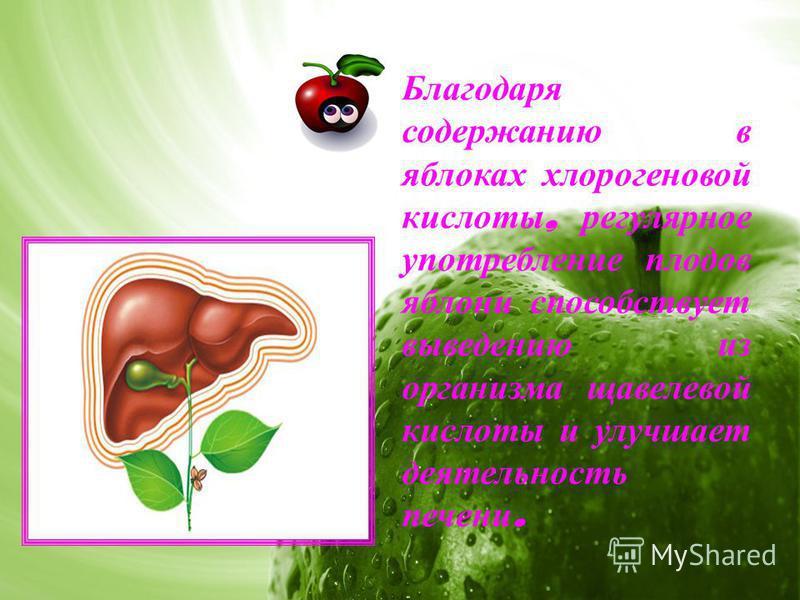 Благодаря содержанию в яблоках хлорогеновой кислоты, регулярное употребление плодов яблони способствует выведению из организма щавелевой кислоты и улучшает деятельность печени.