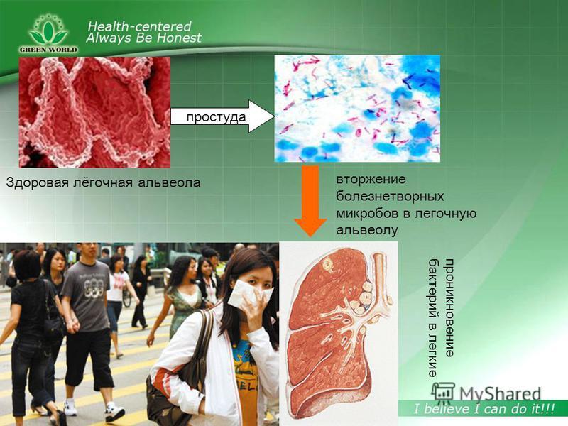 Здоровая лёгочная альвеола вторжение болезнетворных микробов в легочную альвеолу проникновение бактерий в легкие простуда