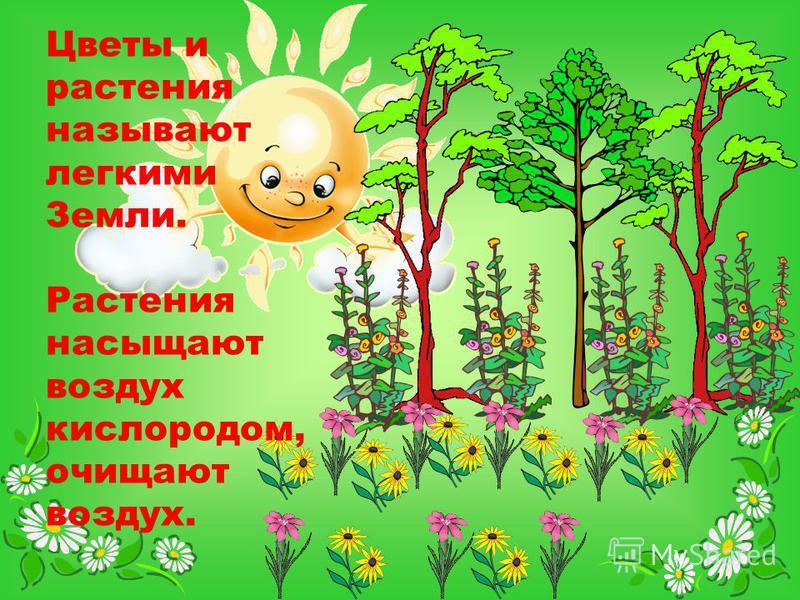 Цветы и растения называют легкими Земли. Растения насыщают воздух кислородом, очищают воздух.