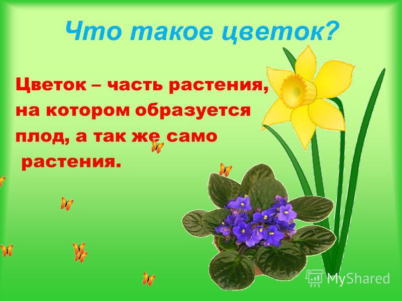 Что такое цветок? Цветок – часть растения, на котором образуется плод, а так же само растения.