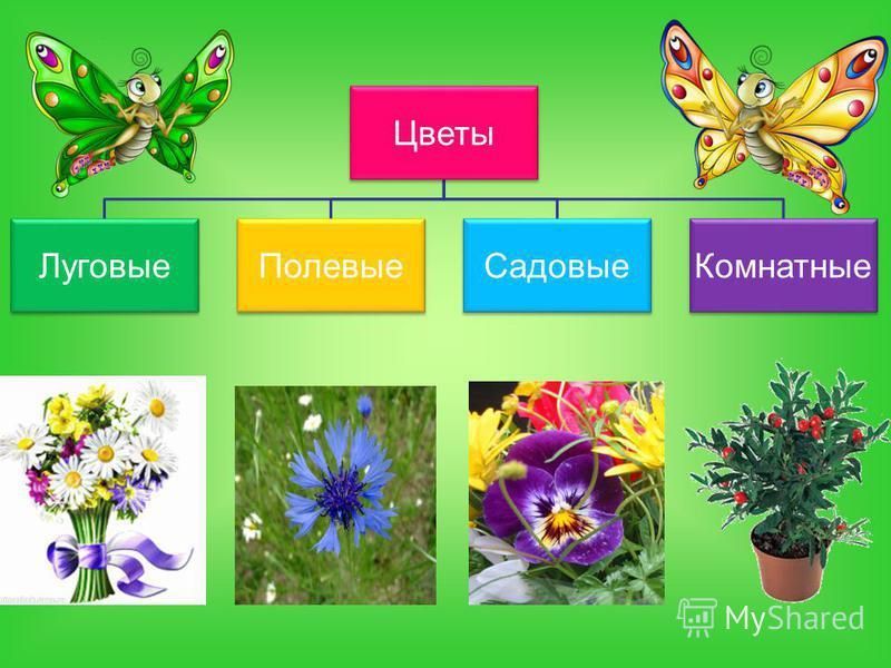 Цветы Луговые ПолевыеСадовые Комнатные