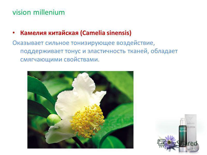 Камелия китайская (Camelia sinensis) Оказывает сильное тонизирующее воздействие, поддерживает тонус и эластичность тканей, обладает смягчающими свойствами. vision millenium