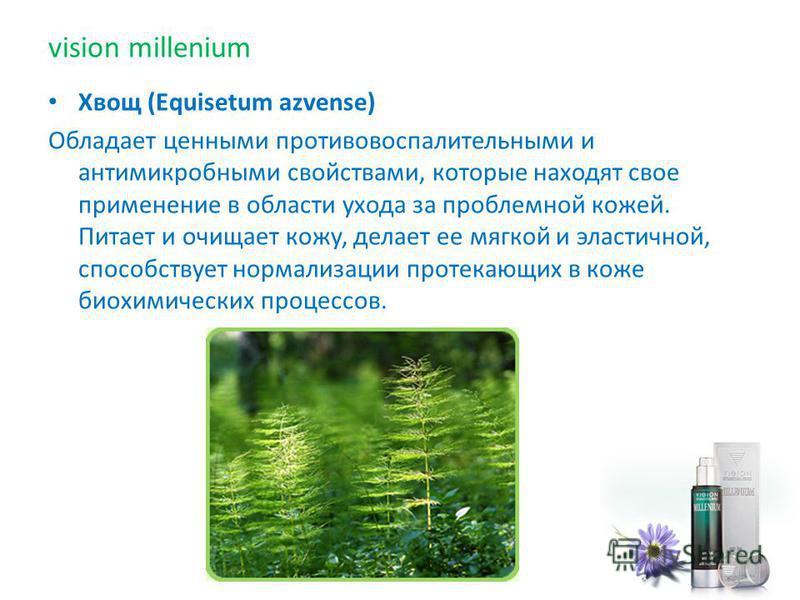Хвощ (Equisetum azvense) Обладает ценными противовоспалительными и антимикробными свойствами, которые находят свое применение в области ухода за проблемной кожей. Питает и очищает кожу, делает ее мягкой и эластичной, способствует нормализации протека