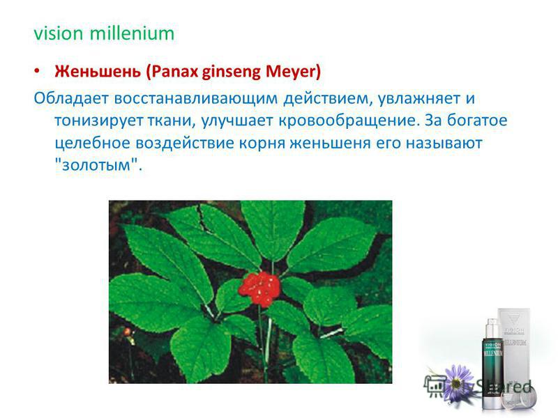 Женьшень (Раnах ginseng Meyer) Обладает восстанавливающим действием, увлажняет и тонизирует ткани, улучшает кровообращение. За богатое целебное воздействие корня женьшеня его называют золотым. vision millenium
