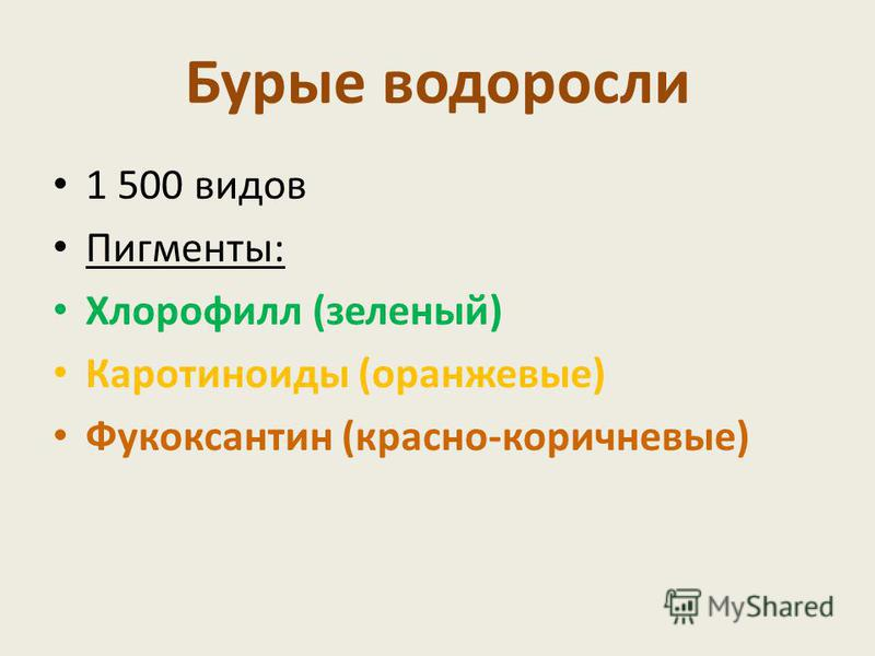 Бурые водоросли 1 500 видов Пигменты: Хлорофилл (зеленый) Каротиноиды (оранжевые) Фукоксантин (красно-коричневые)