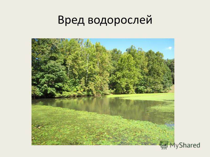 Вред водорослей