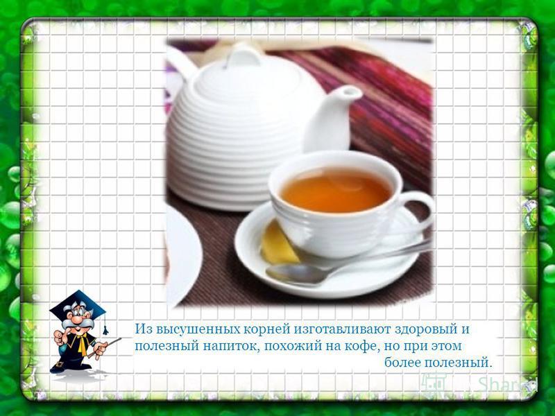 Из высушенных корней изготавливают здоровый и полезный напиток, похожий на кофе, но при этом более полезный.