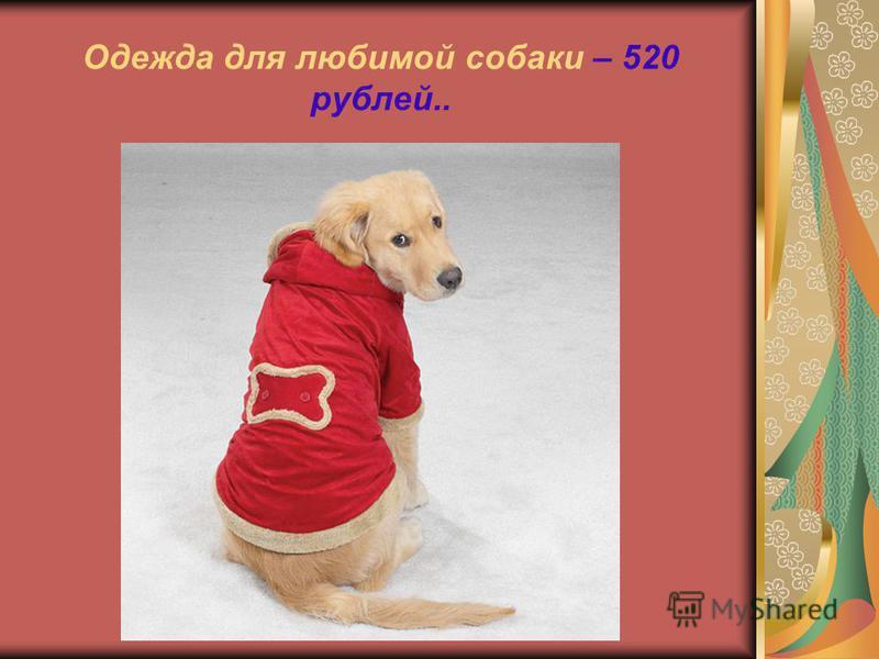 Одежда для любимой собаки – 520 рублей..