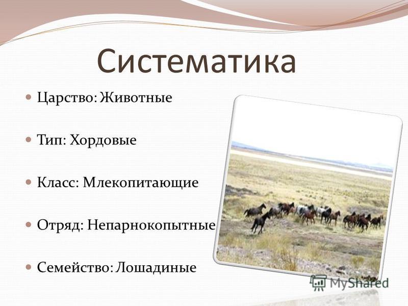 Систематика Царство: Животные Тип: Хордовые Класс: Млекопитающие Отряд: Непарнокопытные Семейство: Лошадиные