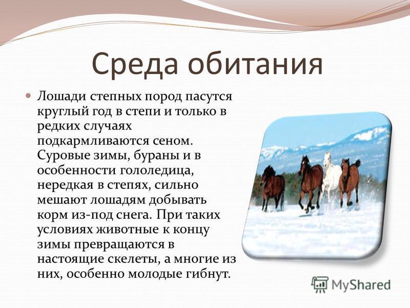 Среда обитания Лошади степных пород пасутся круглый год в степи и только в редких случаях подкармливаются сеном. Суровые зимы, бураны и в особенности гололедица, нередкая в степях, сильно мешают лошадям добывать корм из-под снега. При таких условиях