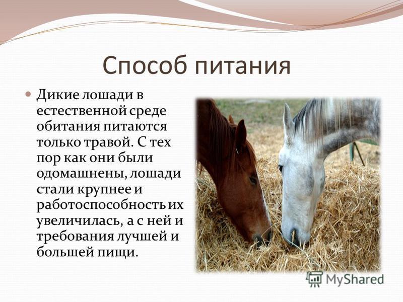 Способ питания Дикие лошади в естественной среде обитания питаются только травой. С тех пор как они были одомашнены, лошади стали крупнее и работоспособность их увеличилась, а с ней и требования лучшей и большей пищи.