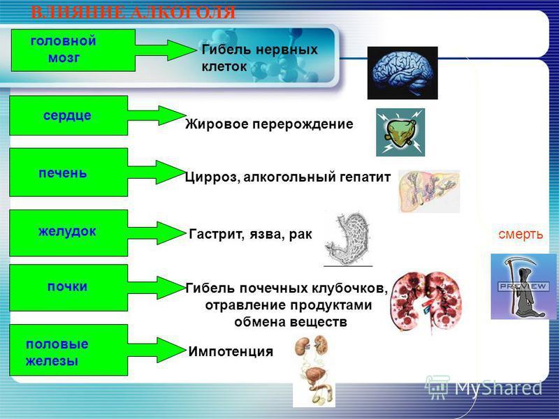 Губительное воздействие этилового спирта Реакции окисления этилового спирта (до альдегидов и кетонов) губительны на живые организмы. www.themegallery.com