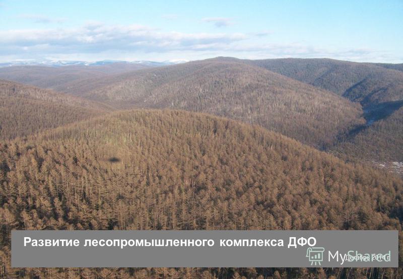 1 Развитие лесопромышленного комплекса ДФО Декабрь 2014 г.