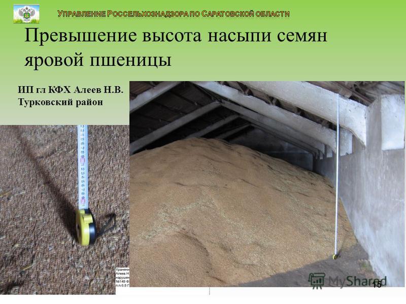 15 Превышение высота насыпи семян яровой пшеницы ИП гл КФХ Алеев Н.В. Турковский район