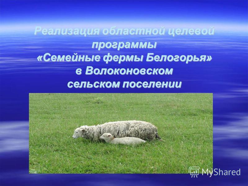 Реализация областной целевой программы «Семейные фермы Белогорья» в Волоконовском сельском поселении