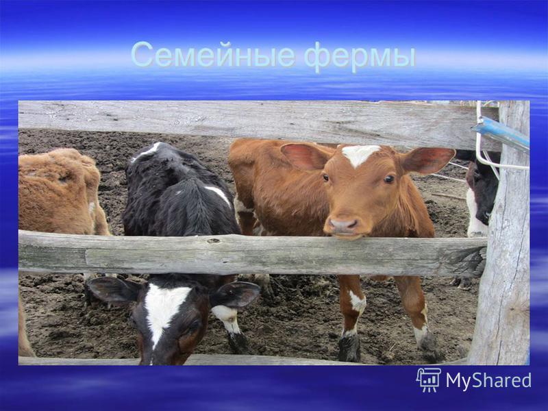 Семейные фермы