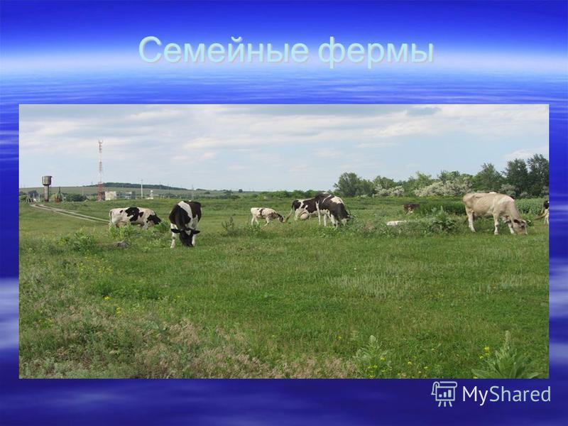 Семейные фермы Семейные фермы