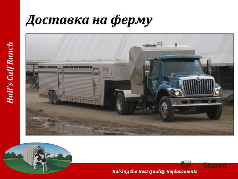 Halls Calf Ranch Raising the Best Quality Replacements Доставка на ферму
