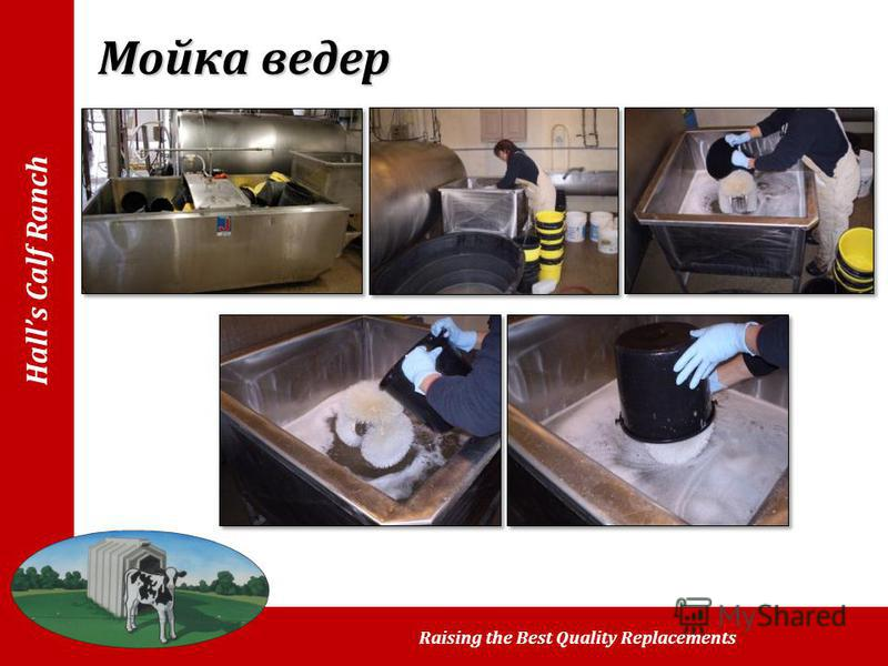 Halls Calf Ranch Raising the Best Quality Replacements Мойка ведер