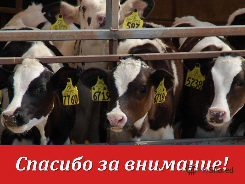 Halls Calf Ranch Raising the Best Quality Replacements Спасибо за внимание!