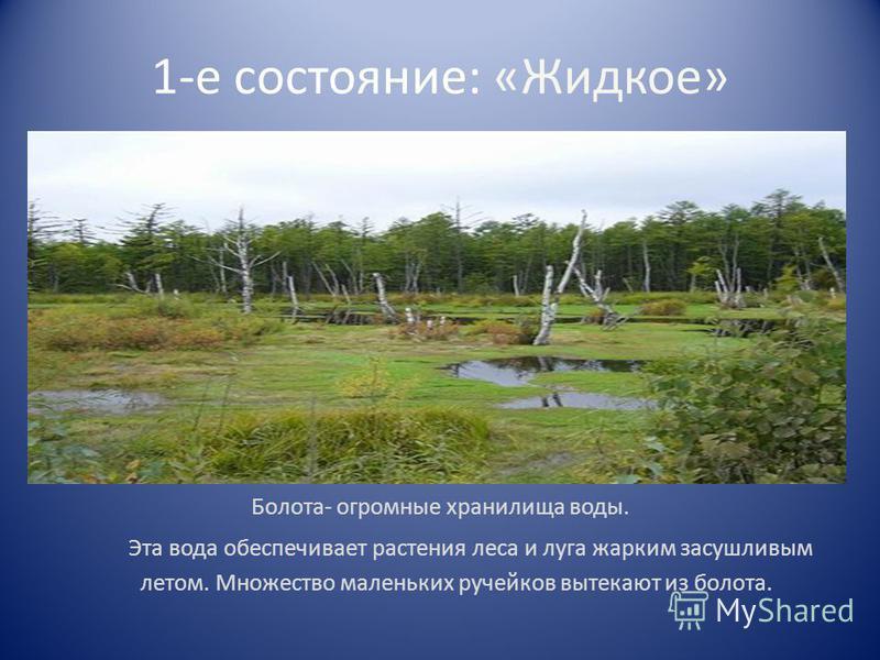 1-е состояние: «Жидкое» Болота- огромные хранилища воды. Эта вода обеспечивает растения леса и луга жарким засушливым летом. Множество маленьких ручейков вытекают из болота.
