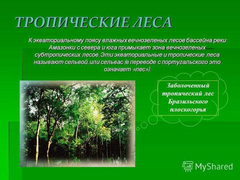 Влажный экваториальный лес амазонской низменности (сельва)