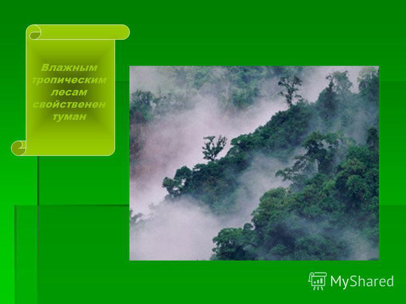 ТРОПИЧЕСКИЕ ЛЕСА К экваториальному поясу влажных вечнозеленых лесов бассейна реки Амазонки с севера и юга примыкает зона вечнозеленых субтропических лесов. Эти экваториальные и тропические леса называют сельвой, или сельва ( в переводе с португальско