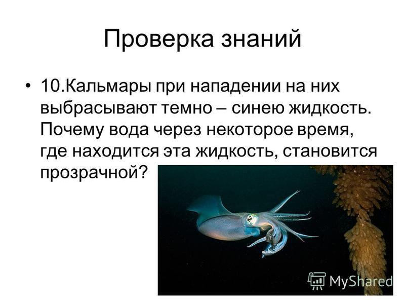 Проверка знаний 10. Кальмары при нападении на них выбрасывают темно – синею жидкость. Почему вода через некоторое время, где находится эта жидкость, становится прозрачной?