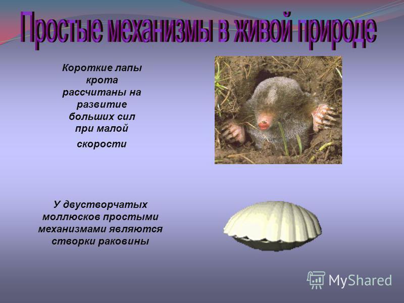 Короткие лапы крота рассчитаны на развитие больших сил при малой скорости У двустворчатых моллюсков простыми механизмами являются створки раковины